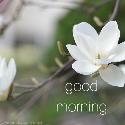 Good Morning Winter Flower : Good morning images with flowers white