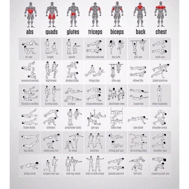 Bodyweight exercises for all the muscle groups