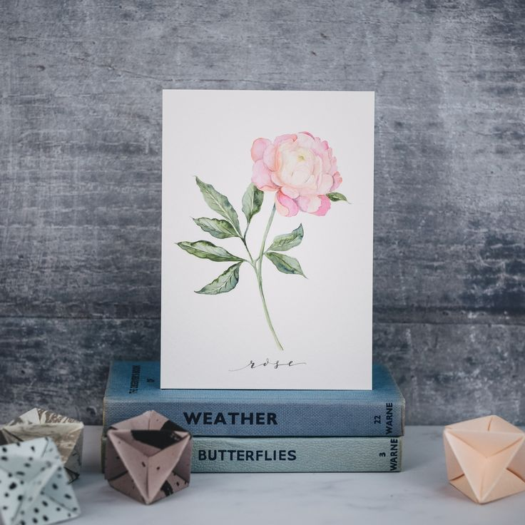 Pink Peony illustration. Hand Painted botanical illustrations in watercolour. Get in touch to discuss your bespoke commission.