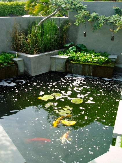 You can make an outdoor fish paradise of your own for for Build your own fish pond
