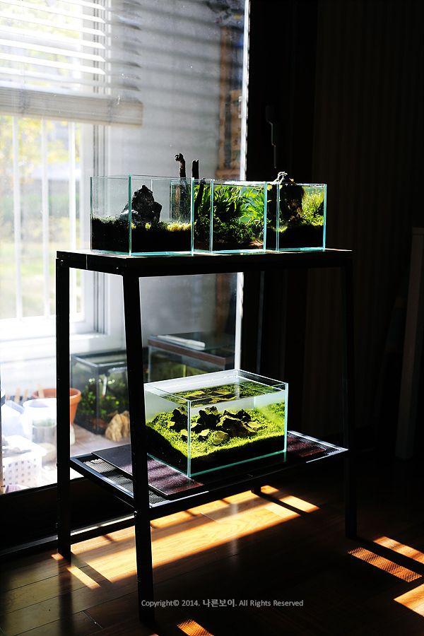 mini aquarium by Taeyoon,Ki