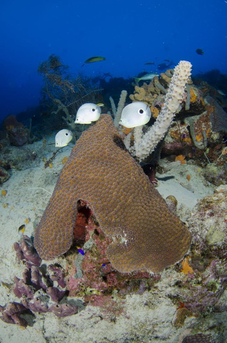 Bilder Tauchen Schnorcheln Tauchreise Bonaire Aruba Curacao Karibik Antillen - Karibiksport