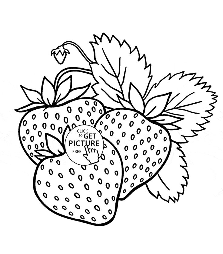 Yummy Strawberries Fruit Coloring Page For Kids Fruits Pages