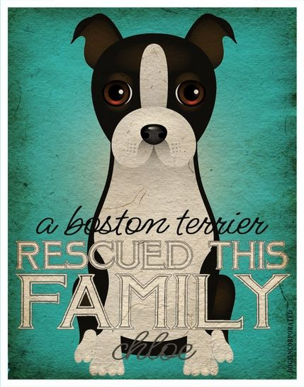 A Boston Terrier Rescued This Family