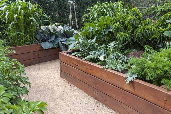 Square Foot Gardening Vs Raised Beds