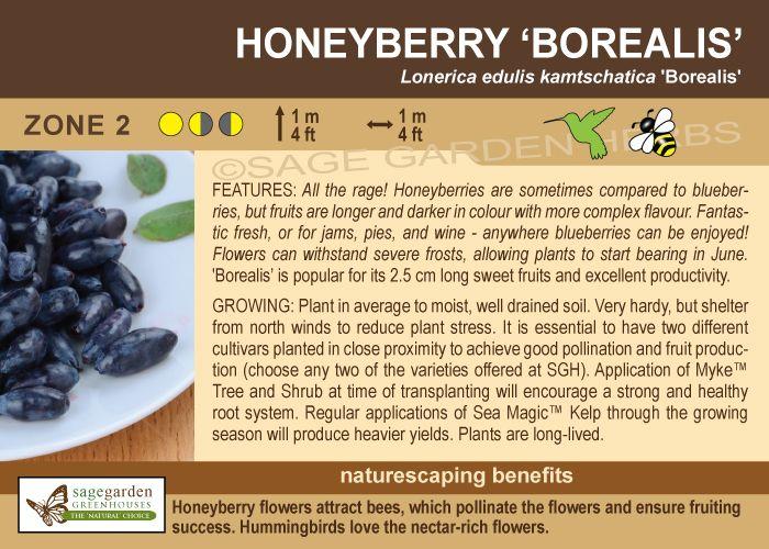 Borealis Honeyberry/Haskap zone 2
