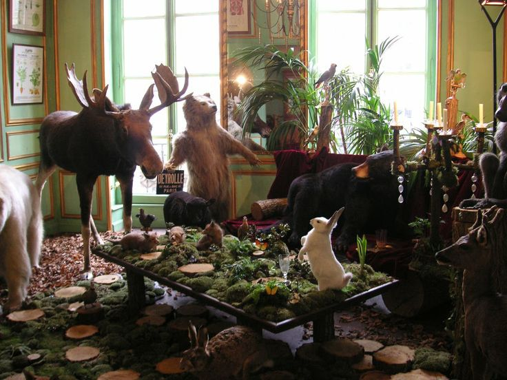 Deyrolle in Paris.  A surreal and amazing store.
