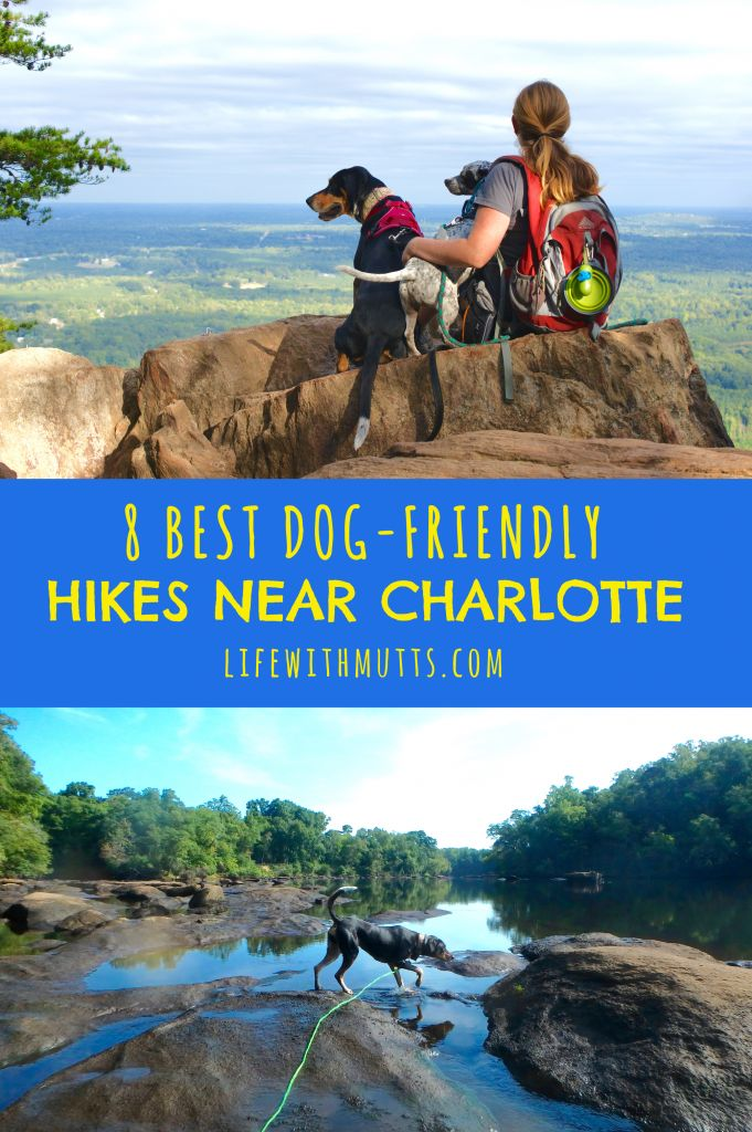 Check out the 8 best dog-friendly hikes within 30 minutes of Charlotte, NC. Load up your dog and hit the trail, not the road!