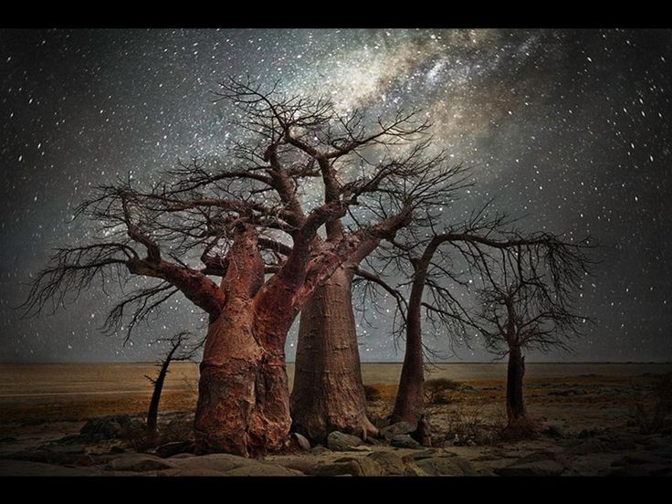 """Smithsonian Magazine on Twitter: """"Baobabs in the moonlight embody the natural beauty of ancient trees in Africa http://t.co/ody1wZIBlN http://t.co/4WTNUKfSqu"""""""