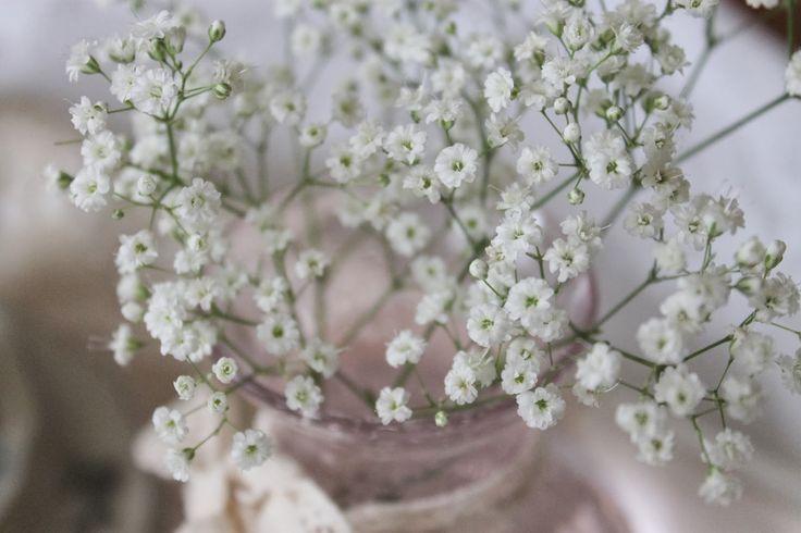 Image result for brudeslør blomst