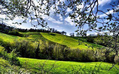 Scarica sfondi campi verdi, primavera, erba verde, tempo soleggiato