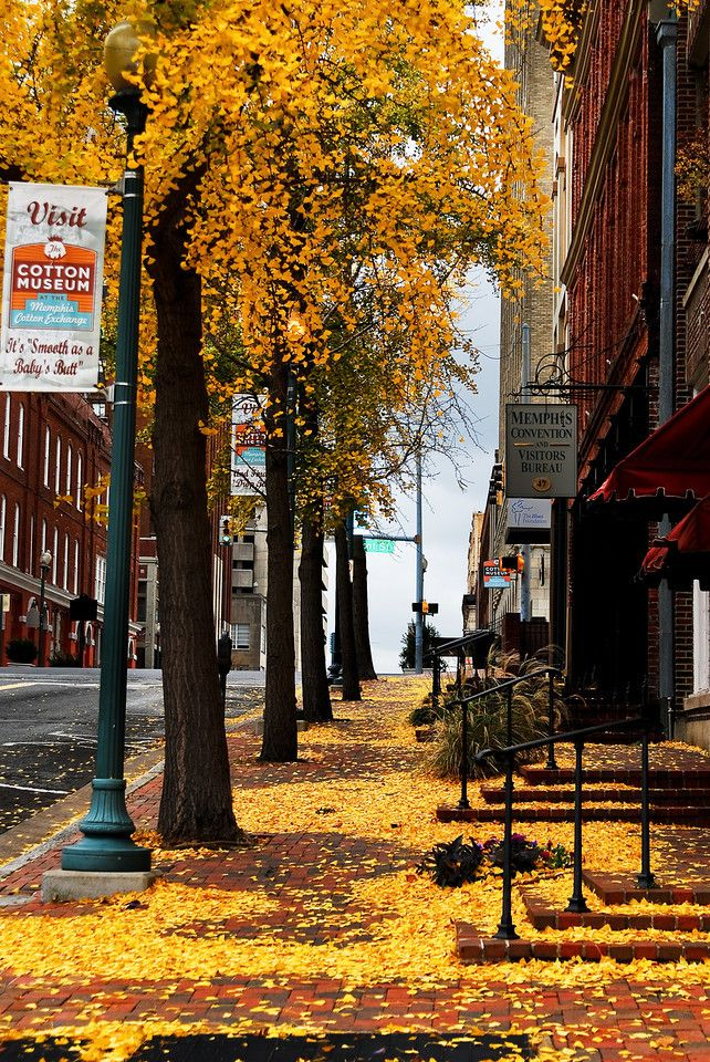 Fall leaves in downtown Memphis, Tennessee! One thing I miss from the South, the changing leaves!   I've been to New York and Washington D.C. But I prefer Memphis. There is just something magical about this city.