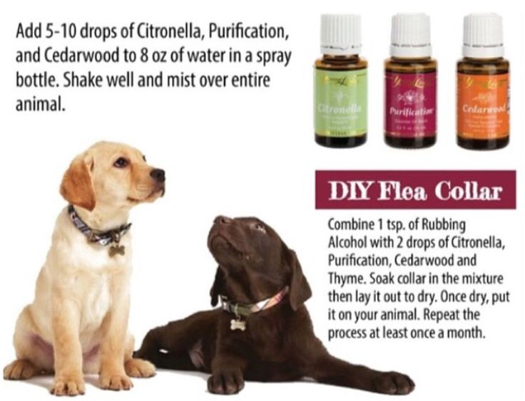 Flee Meds For Cats And Dogs