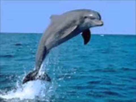 Meditatie Zwemmen met dolfijnen