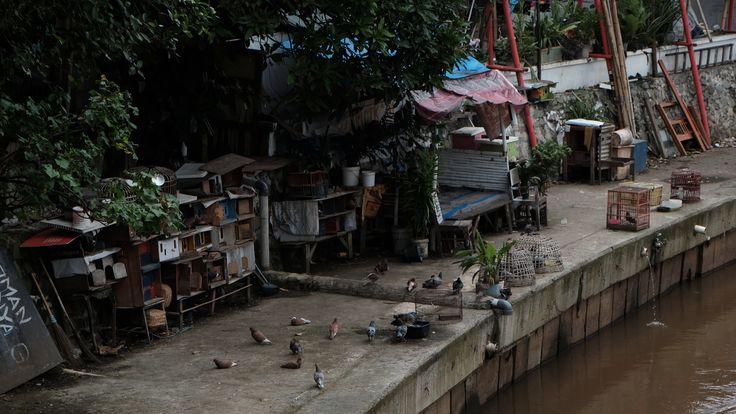 """Qatrunnada Salsabila / 1306392784  """"Rumah yang Lain""""  Ruang kampung bukan hanya miliki manusia. Disudut-sudut kampung hewan hidup dengan tenang.  Fujifilm X-T10 / f/5.6 / 1/800 / ISO 320 / 50mm / Pattern / Auto WB / Flash Off"""