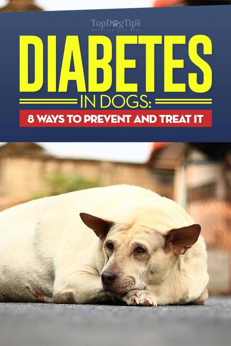 25 Ways To Manage Diabetes In Dogs Infographic Diabetic Dog