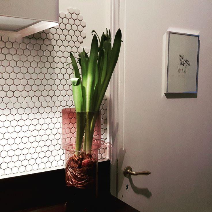 marble, glass, plant, oak, ceramic, kitchen