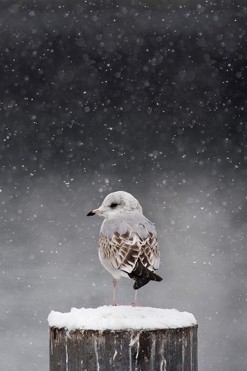 beautiful bird winter ndash - photo #28