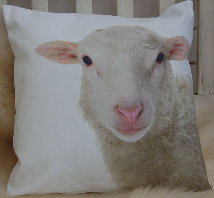 animals owieczka