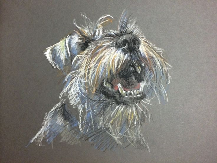 Schnauzer Drawing Easy: 694 Best Images About Dog Drawings And Paintings On