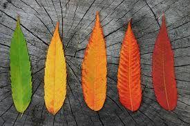 Image result for autumn colour palette