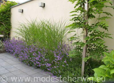 idee kleine moderne border - Lavandula angustifolia Dwarf Blue, Miscanthus sinensis Kleine Fontane