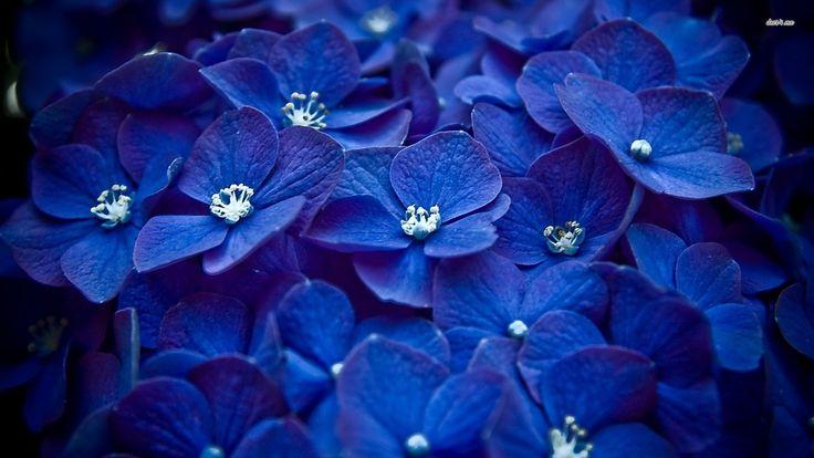 Blue Flower Desktop Wallpaper | Wallpaper Kid Galleries @ www ...