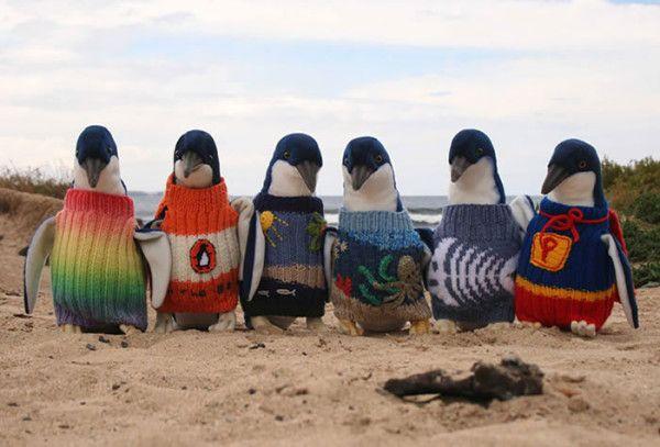 pinguinos-busos-01