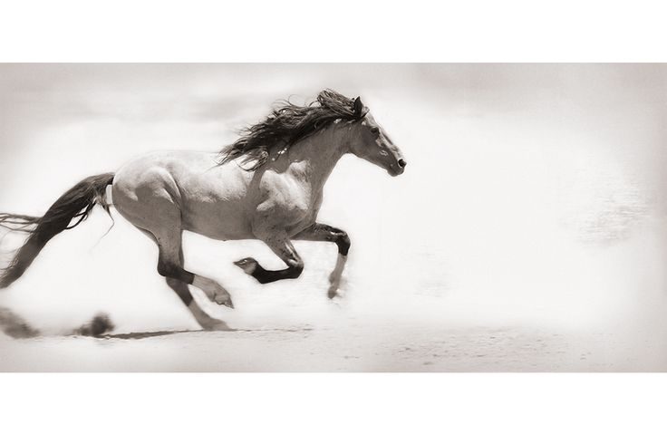 run like the wind... wild horse photography