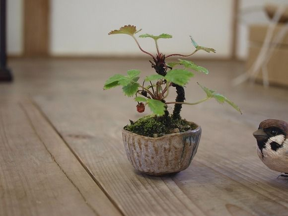 Sweet tiny bonsai - a strawberry?!?