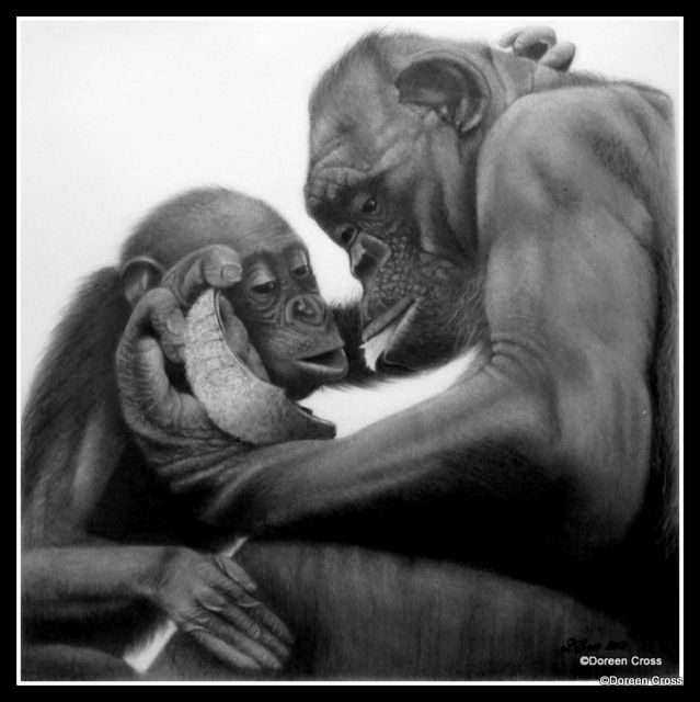 Bonobos in graphite