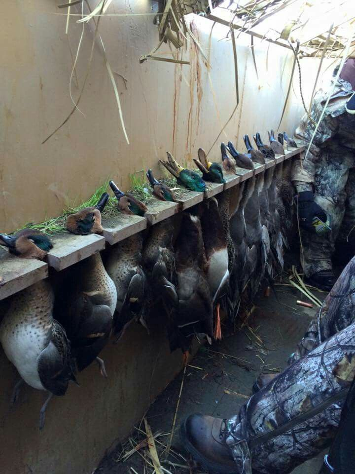 Additions to the duck blind!