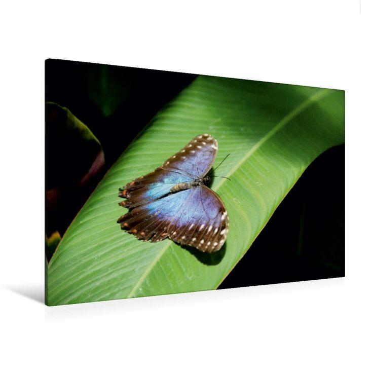 Himmelsfalter (Premium Foto-Leinwand 45x30 cm, 50x75 cm, 90x60 cm, 120x80 cm)