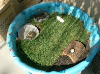"Tortoise ""cage"" out of a kiddy pool. Good idea... I might do this when I get a tortoise..."