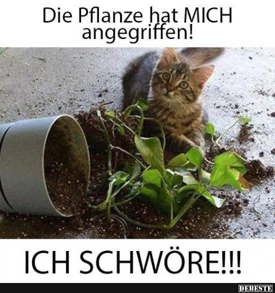 Die Pflanze hat mich angegrieffen!