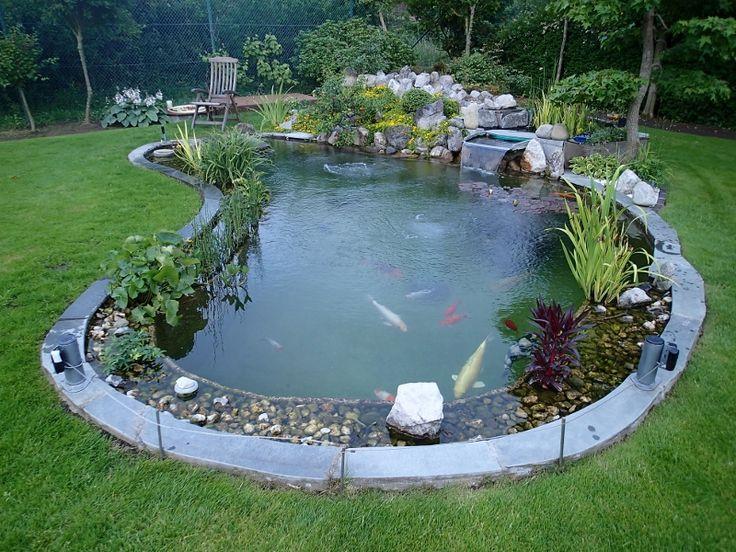 Les 526 meilleures images du tableau bassin de jardin sur for Plante bassin poisson