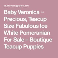 Baby Veronica ~ Precious, Teacup Size Fabulous Ice White Pomeranian For Sale – Boutique Teacup Puppies
