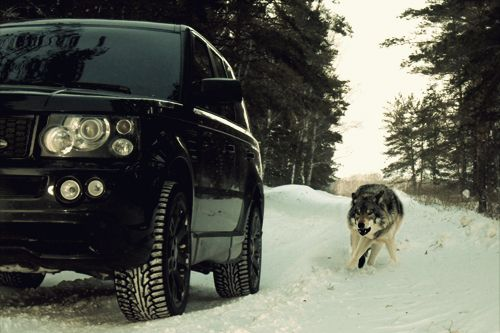 Ranging it through the snow