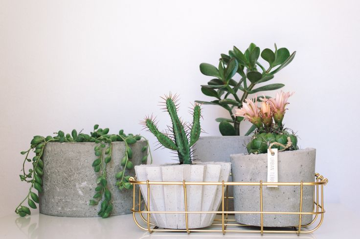 ♡♡♡♡  #concrete #concreteplanters #collection