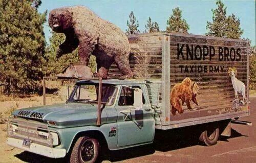 Vintage Taxidermy Truck Outdoors Related Taxidermy Outdoor