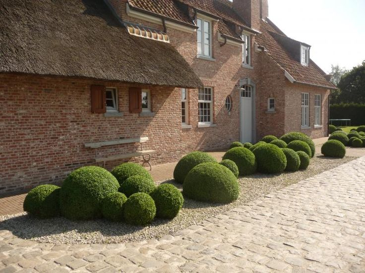 Cloud boxwood, landscape design by Tuinen Denieplant - Aalter - Belgium