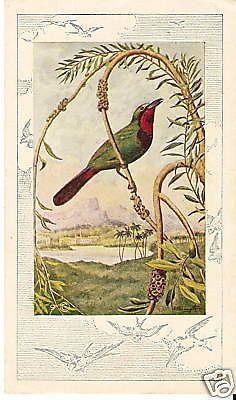 VICTORIAN TRADE CARD Successful Farming Magazine BIRD #Advertisement
