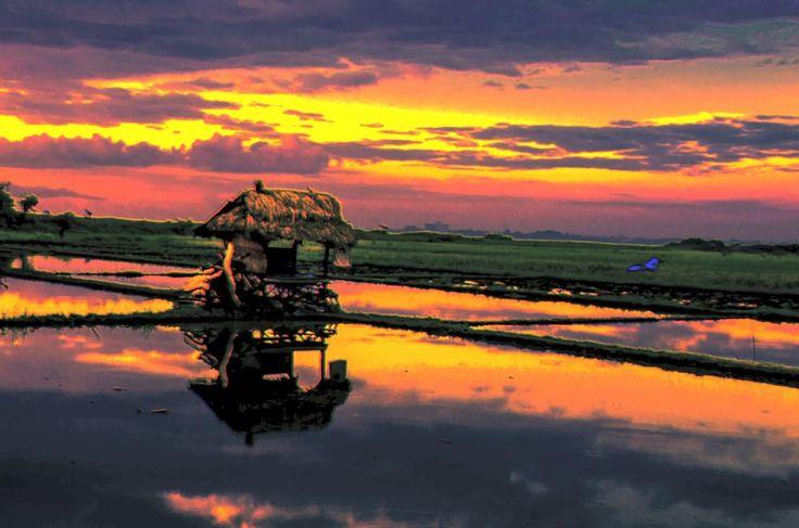 Sunset di tepi sawah by arthamade