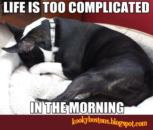 Jillian...every single morning. So not a morning dog, god love her! :)