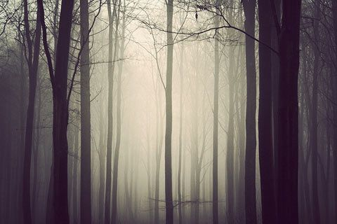 Kim Holtermand.: Beautiful, Art, Trees, Kim Holtermand, Forest, Landscape Pictures, Behance Network, Light, Photography