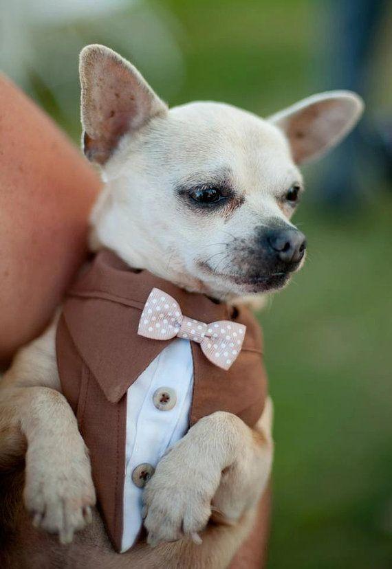 Brown Dog Suit Bandana Sz XS S M