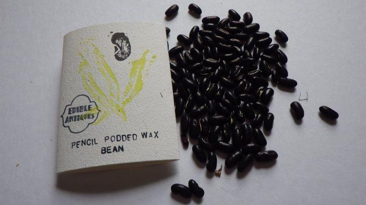 """""""Pencil Podded Wax"""" Bean Seeds"""