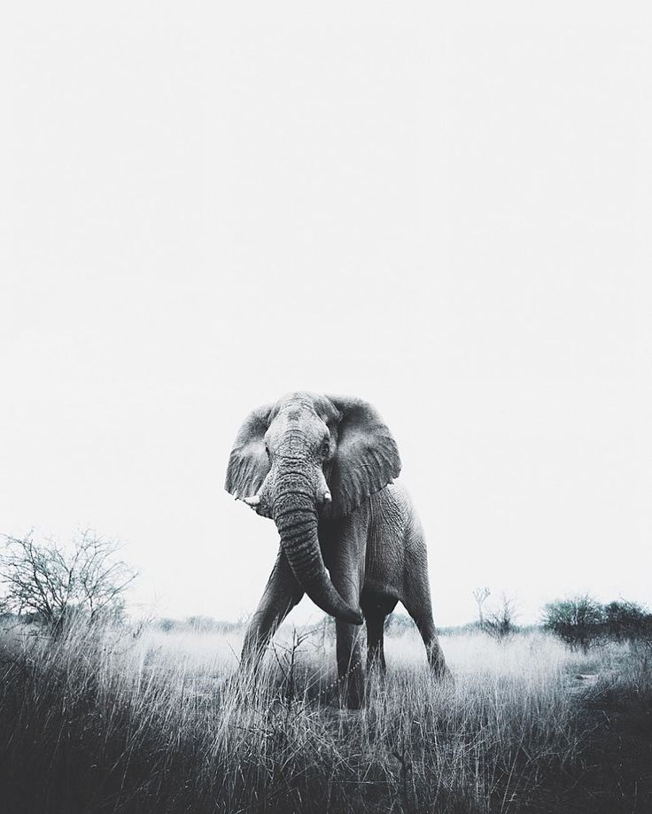 Breathtaking Portraits of Wild Animals by Donal James Boyd #art #photography #Animal Photography