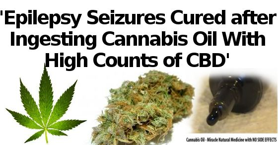 Cannabis Oil For Treating Epilepsy In Dogs