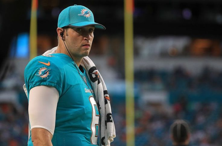 Image result for jay cutler miami dolphins